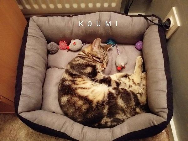 Koumi aout 2019.jpg