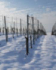 vineyard-1566089_1920.jpg