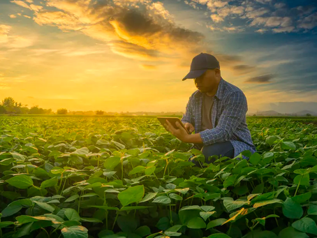 IDB Invest promotes growth and transparency in the agribusiness sector in Latin America