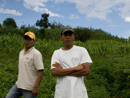 IFC supports produce pay to improve Mexican farmers' access to finance and global supply chains