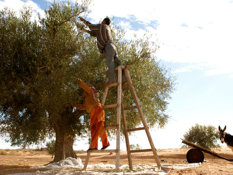 IFAD-BRAC collaboration empowers rural people to build their climate resilience
