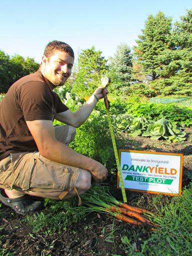 Carrot Tap Root 1