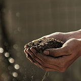Healthier soils genrate nutrients naturally