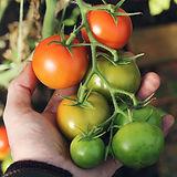 organic materials, beneficial bacteia and fungi