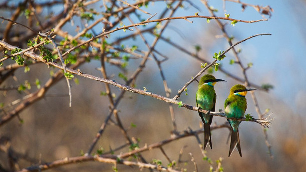 124-etosha-wildlife.jpg
