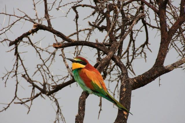 birdlife-8397.jpg