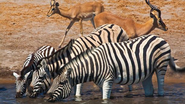 063-etosha-wildlife.jpg