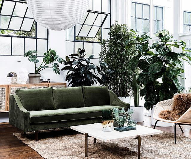 Green velvet sofa. Steel windows in loft apartment. Eco-friendly. Many house plants.