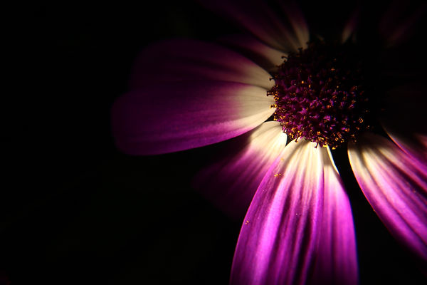 flower, photography, purple