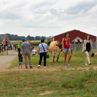 Visitors and animals alike enjoy socalizing on Open Barn Days, where ticket sales help fund the sanctuary