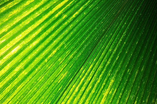 leaf, tropical, plant, nature, green, photography