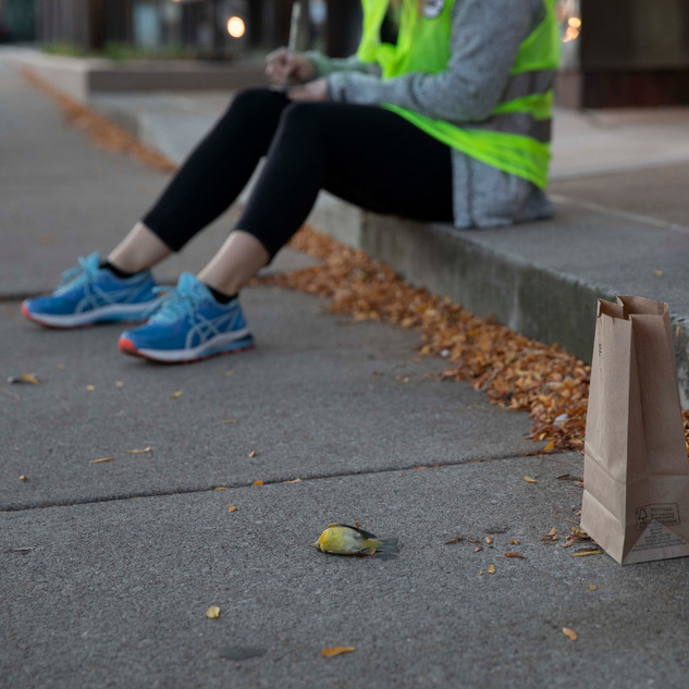 6:43am: a volunteer takes down information for the bag label of this Nashville Warbler.
