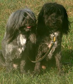 Sheena & Smokey