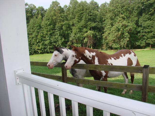 Our Horses Love Ladybug Cottage