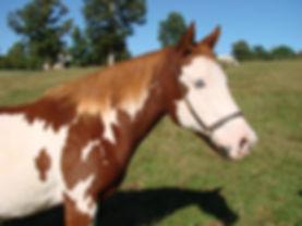 horse photo.jpg