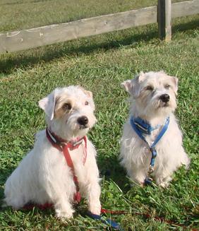 Tex & Cody