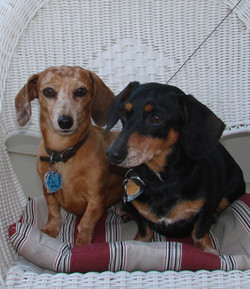 Ellie & Reesie