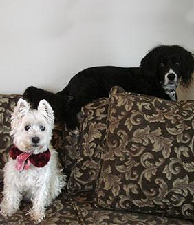 Lily & Barkley