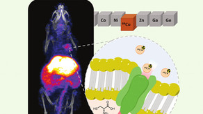 New Cover Article Published in Metallomics Reveals Modulation of Copper Trafficking in Cancer Cells