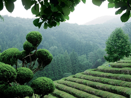 Le thé en Corée du Sud
