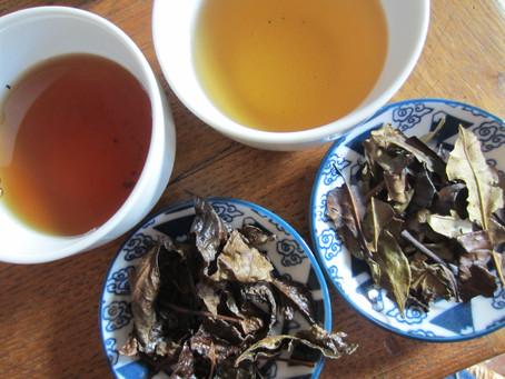 Ayez accès à des thés méconnus en France!