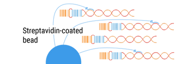 barcode-single-cells-300-03.png