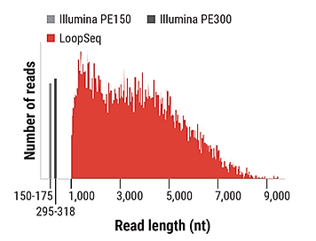 LoopSeq-delivers-longer-read-lengths.PNG