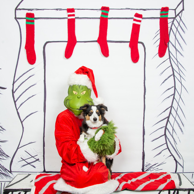 2nd Family Dog Christmas Photos 1