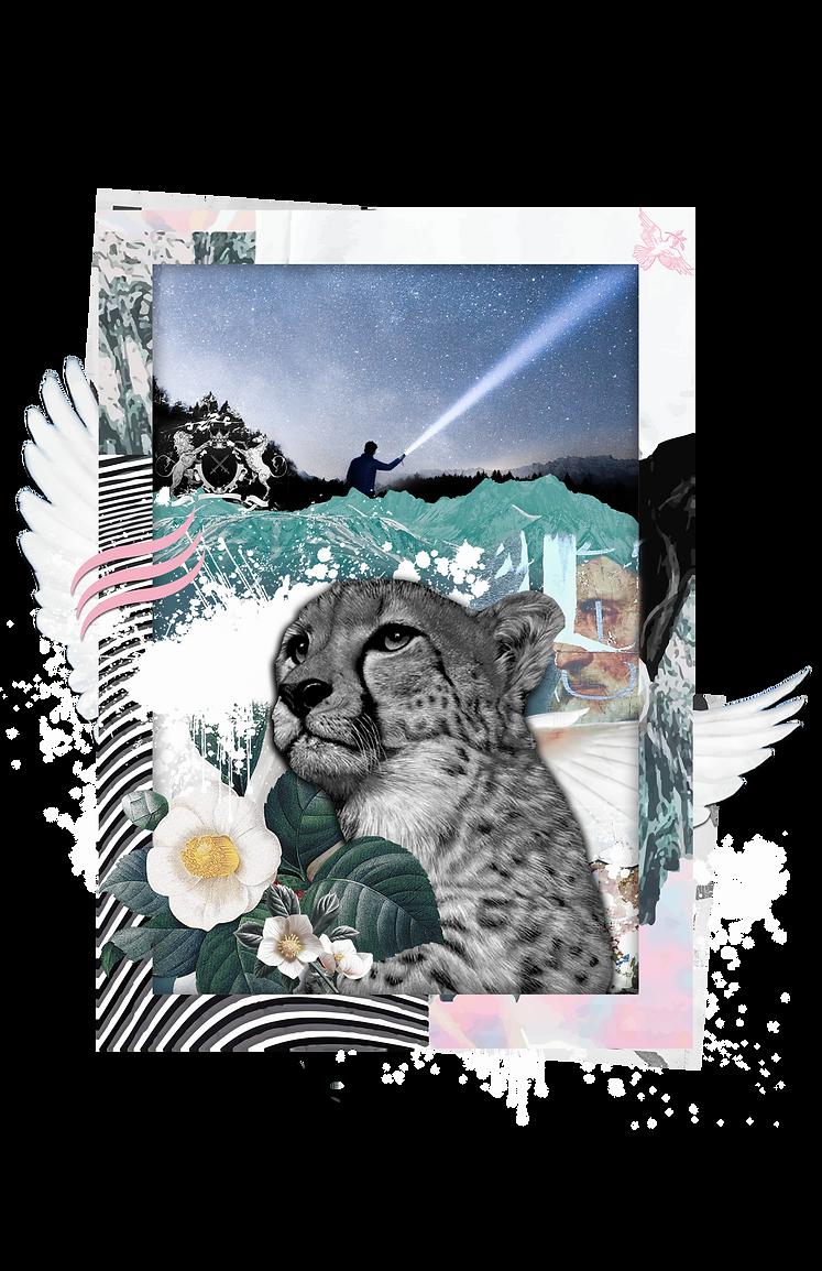cheetah png.png