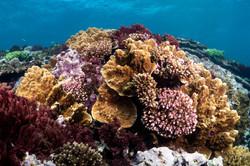 coral1.jpg
