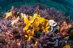 Sponges 2.jpg