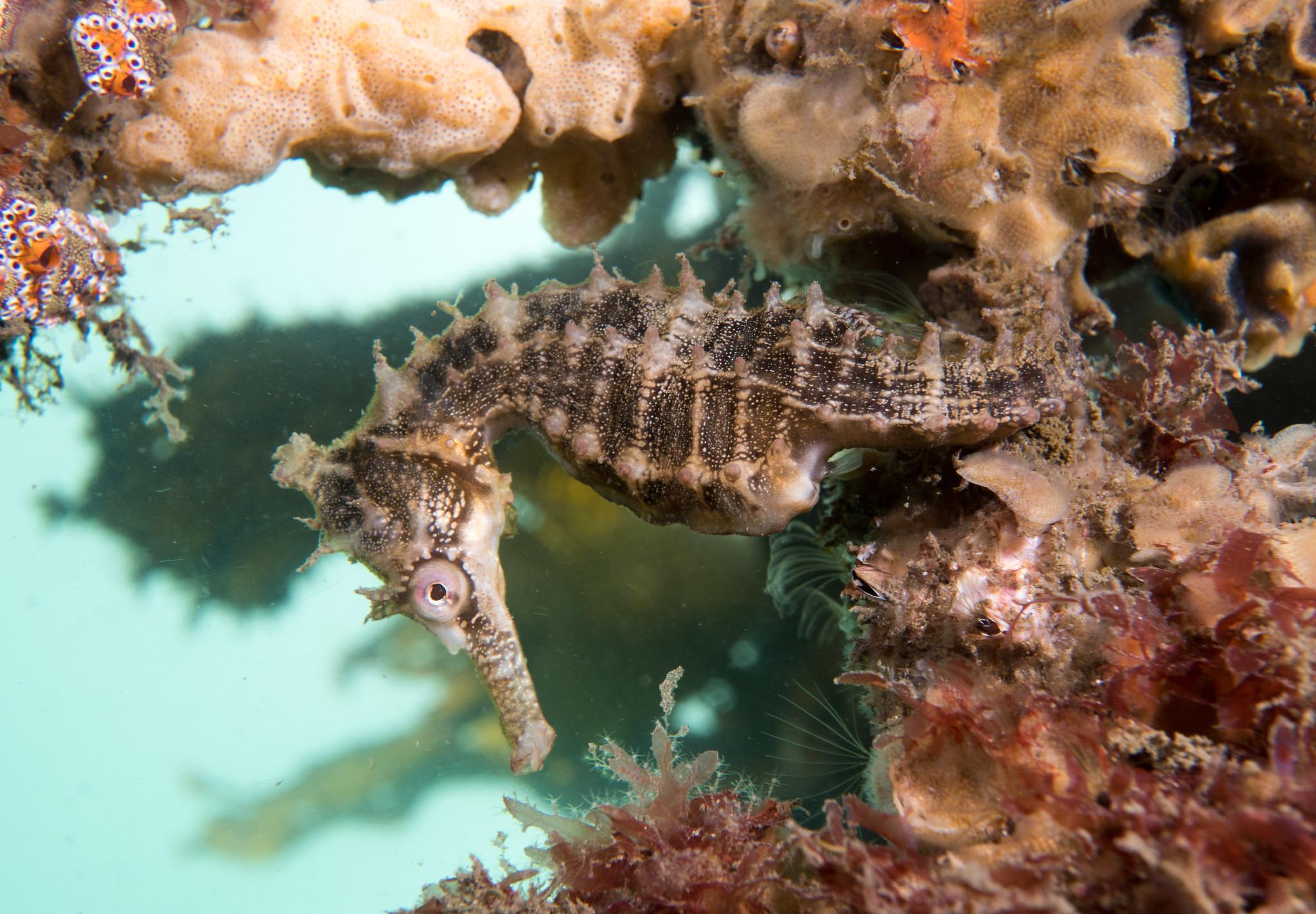 seahorse 3.jpg