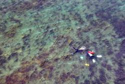 surveying handfish.jpg