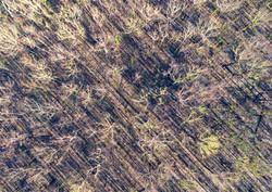 tree shadows.jpg