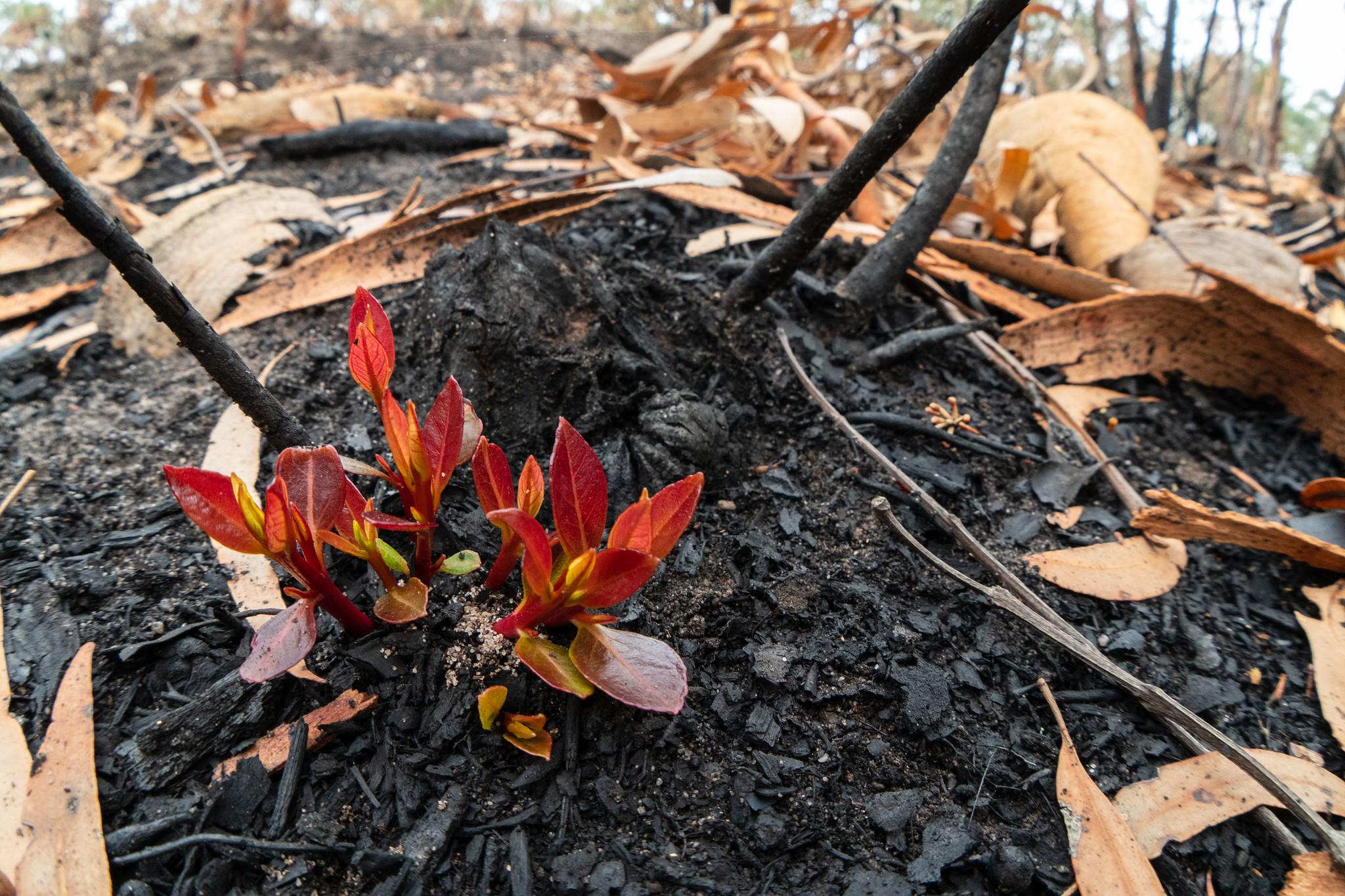 bushfire 2.jpg