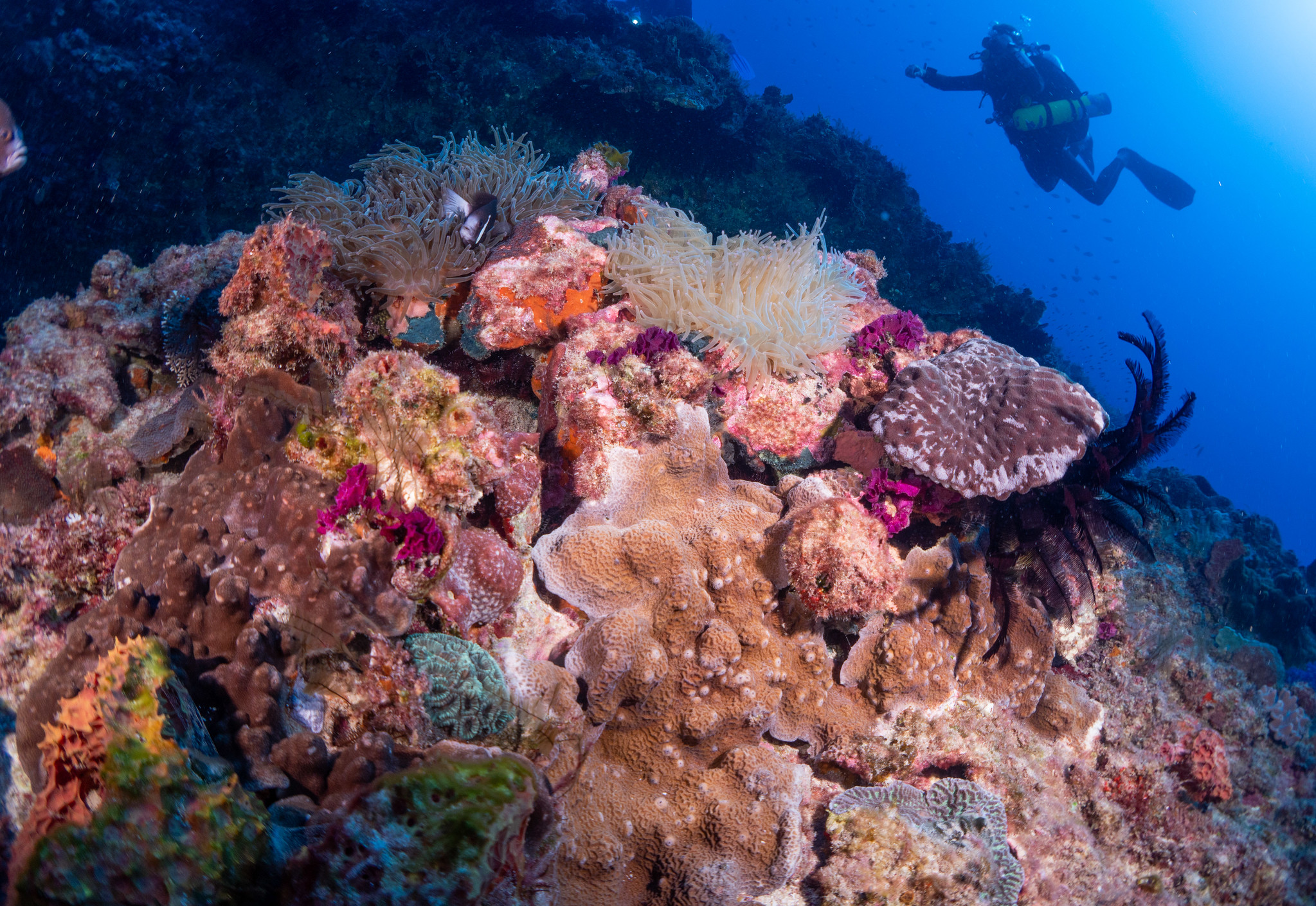 reef 3.jpg