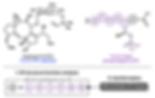 ACS Chem Bio website graphic.png