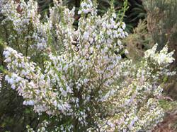 ハイキングコース沿いに咲く花