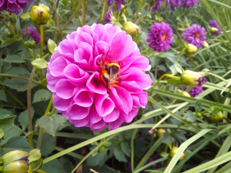人間の食料にも大きな影響を与えるミツバチたちの大切な役割