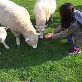 羊たちが集まってきました.jpg