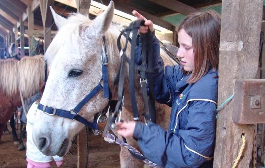 horsetrecking6