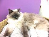 眠そうな猫.jpg