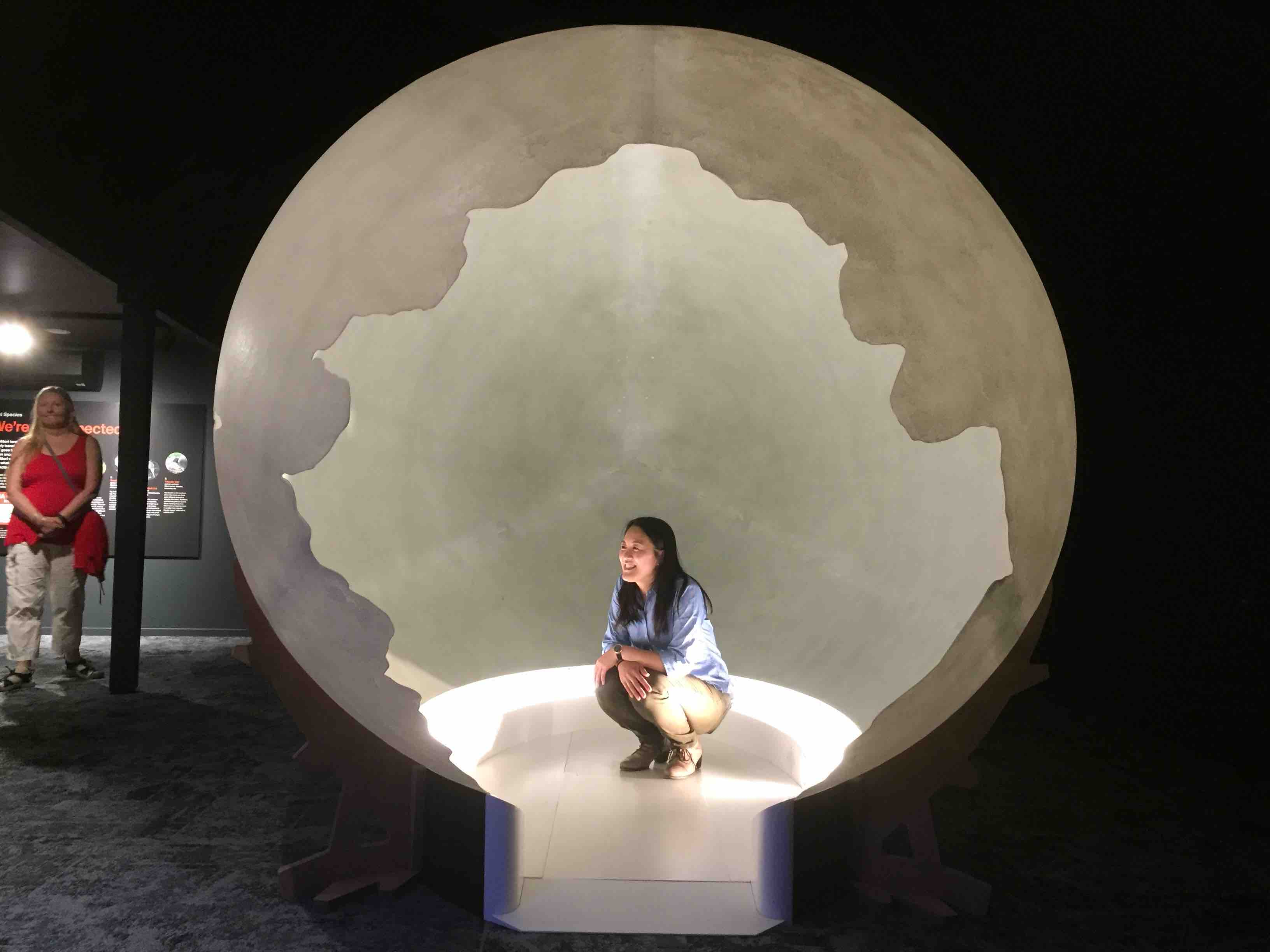 卵の形をした模型