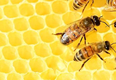 honey-bee.jpg