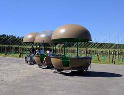 kiwifruitscar1