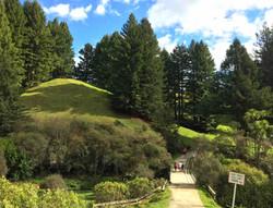緑が多いハイキングルート