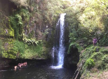滝を見ながらハイキング!タウランガにあるカイアテ滝