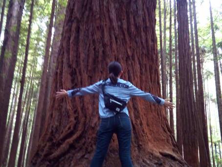 巨木の森に新たなアドベンチャーアクティビティが誕生!