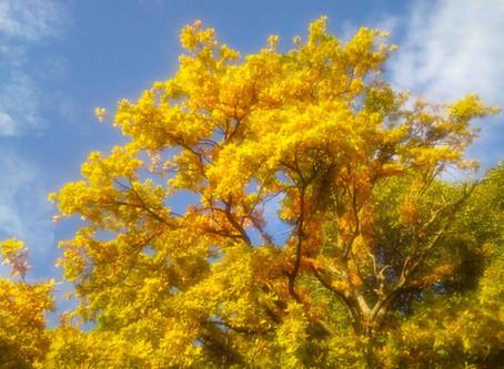 NZは秋は3月から。紅葉の季節が始まろうとしています