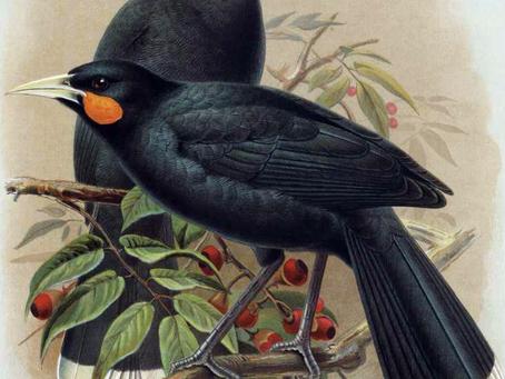 絶滅したNZ固有の鳥の名がつけられた電車が8月から運行開始